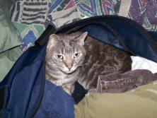 Zeus in my suitcase