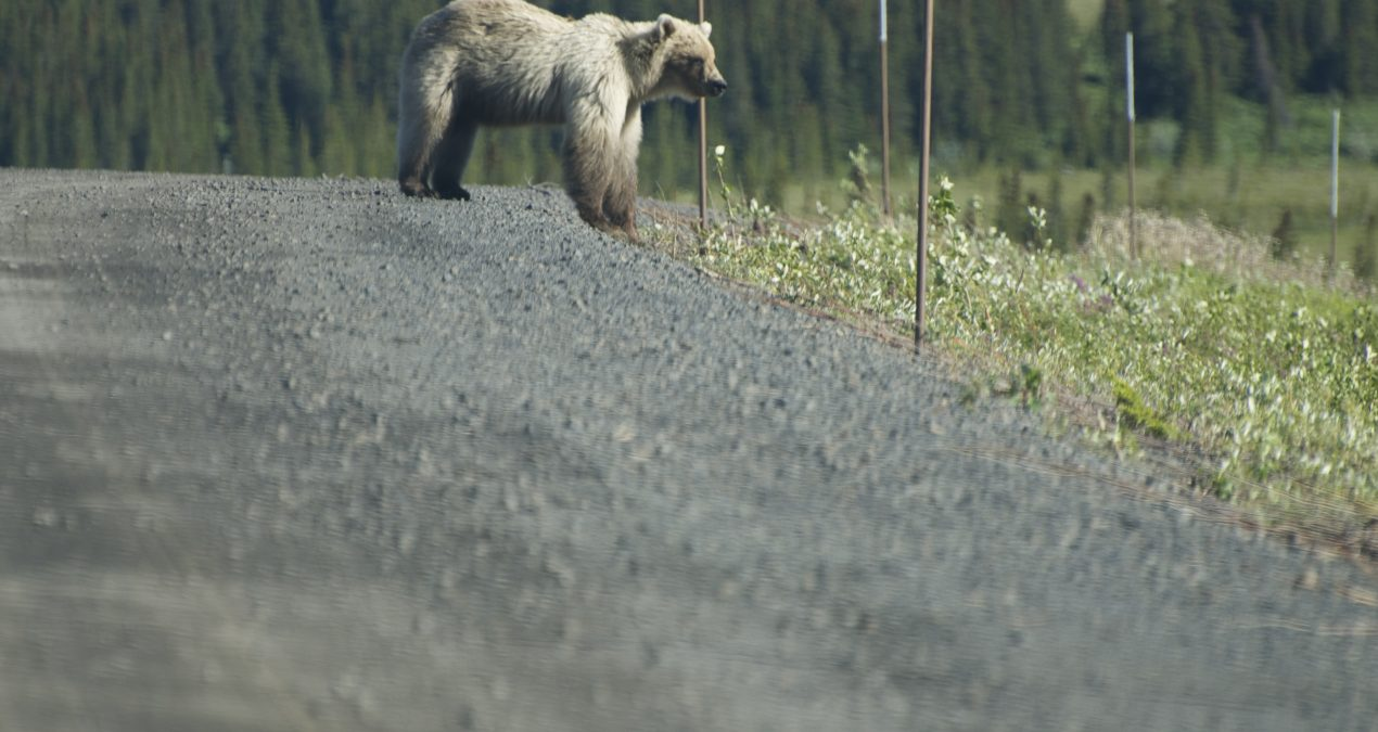 Vacation 2014: The Dempster Highway -> Inuvik