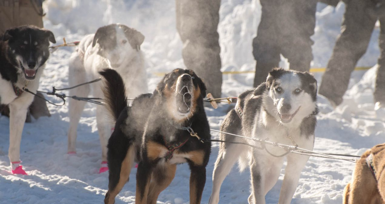 The 2018 Percy DeWolfe Memorial Mail sled dog race