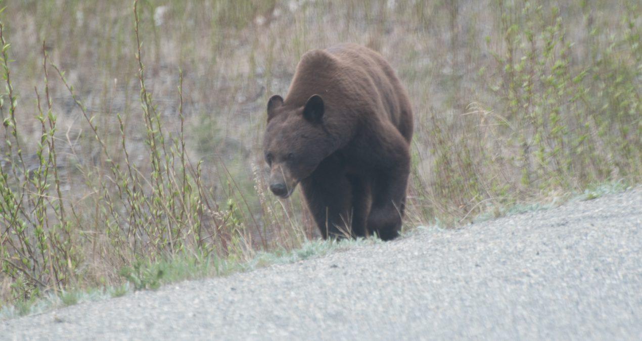 Eww, terrible photos of nice bears