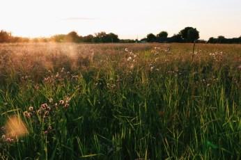 Sun setting over the grassy fields in Romania.