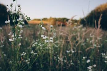 Wildflowers growing in the fields.