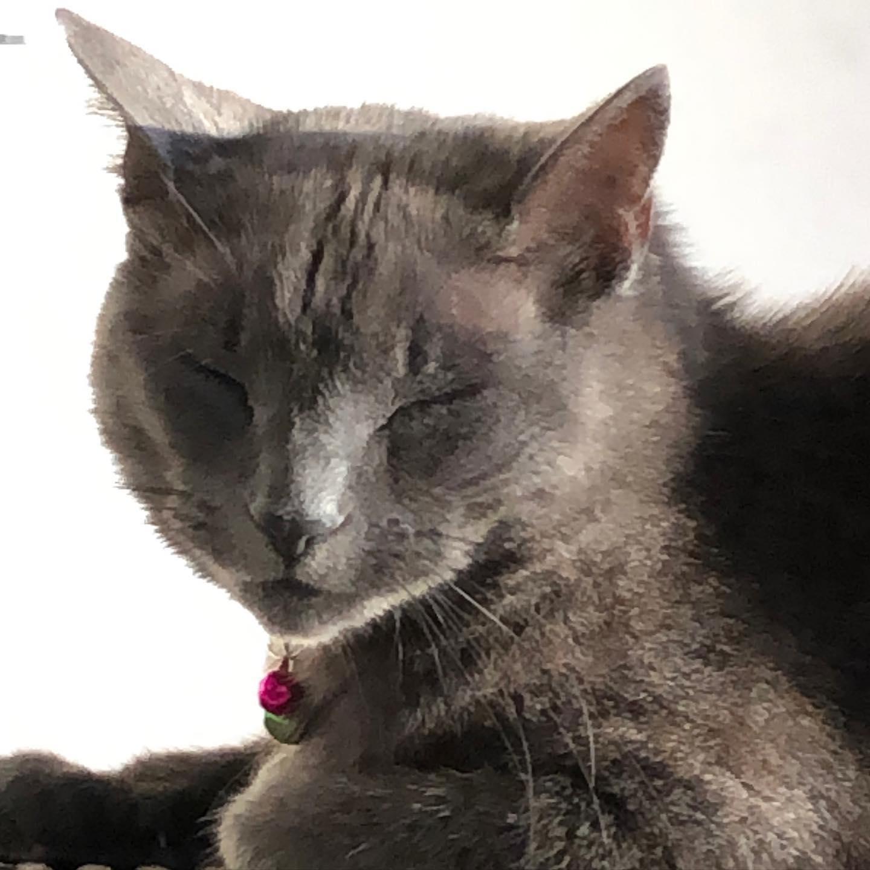 Purring puss cat  ?