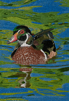 american_wood_duck-web