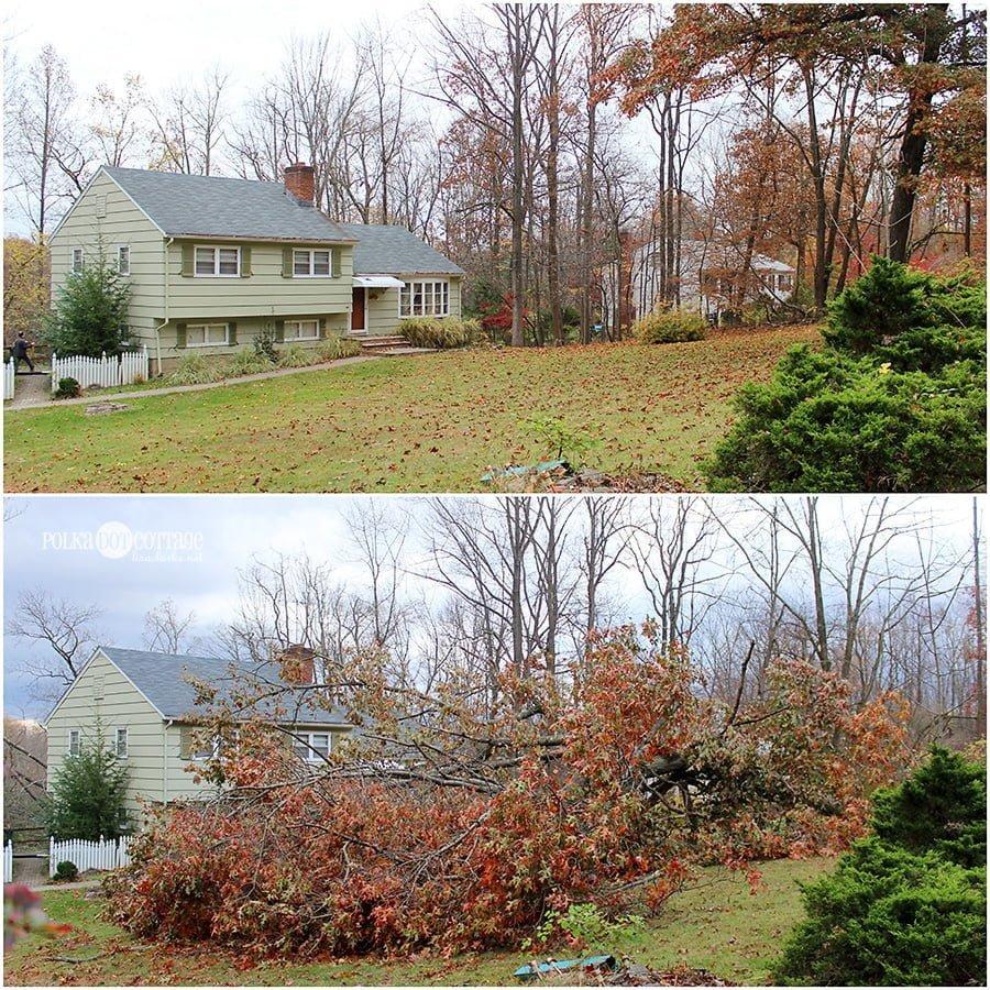 Tree Removal, at Polka Dot Cottage