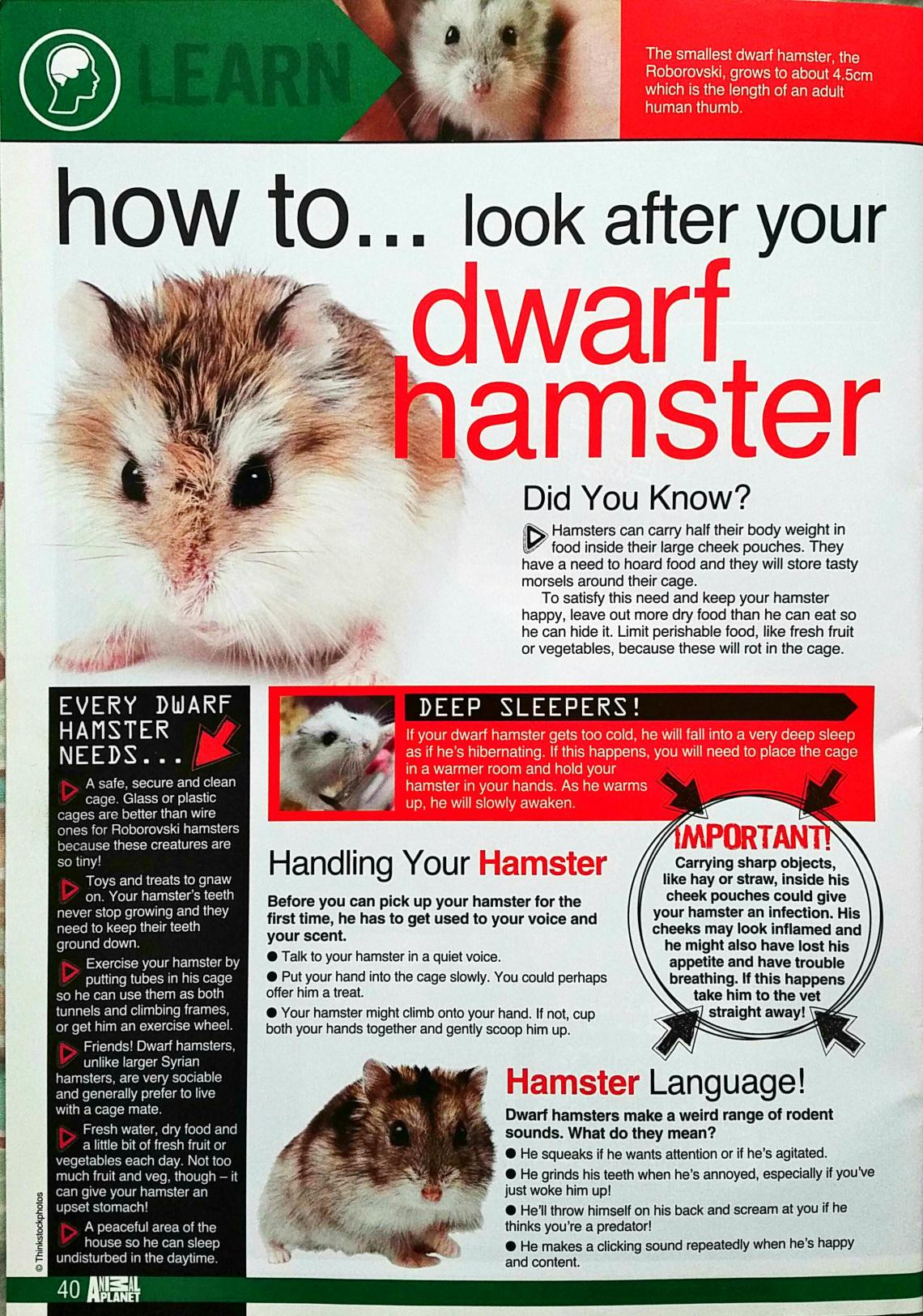 Dwarf Hamster Article
