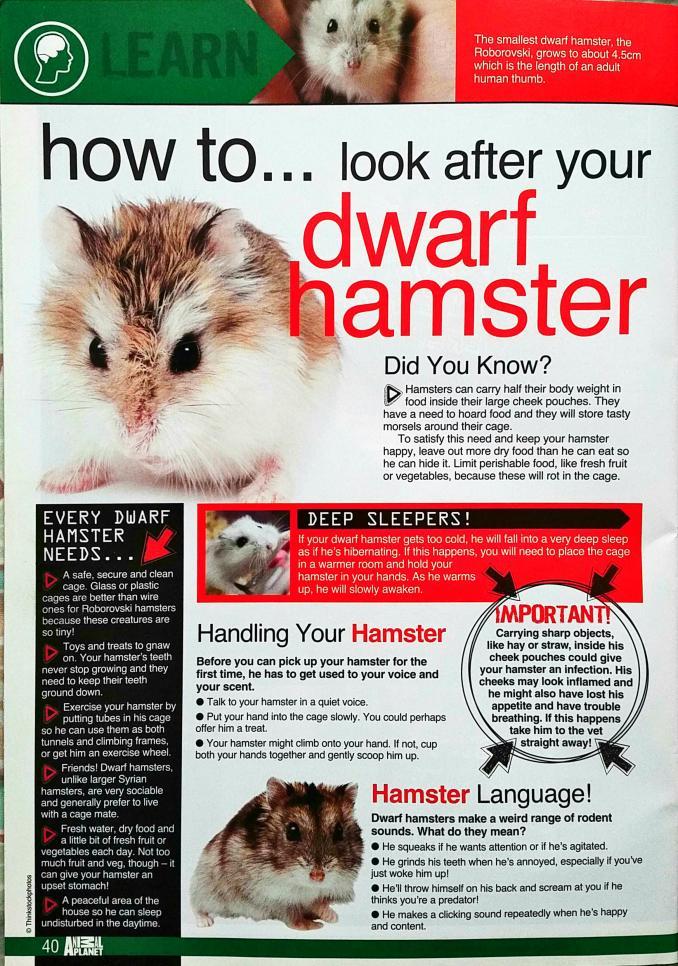 Dwarf Hamster Article