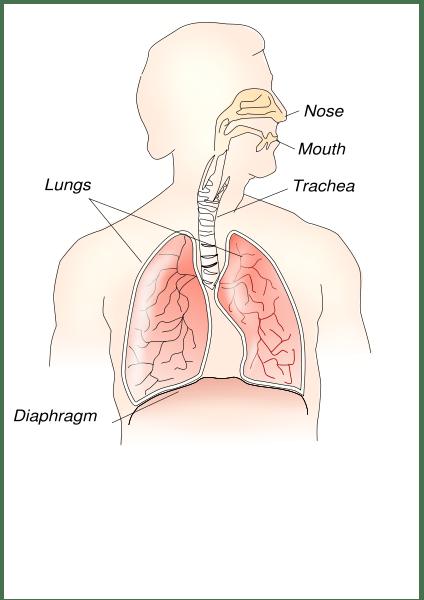 Diaphragm3