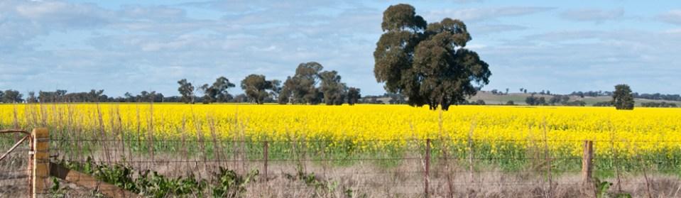 Riverina Landscape between Wagga Wagga and Ganmain, NSW