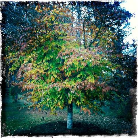 tree in Charleston, SC