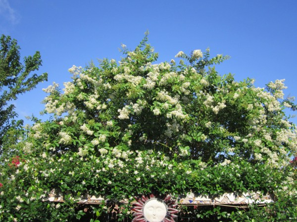 There are many flowering trees that could be a lovely addition to this color pallette such as a white crepe myrtle, magnolia or kidneywood.