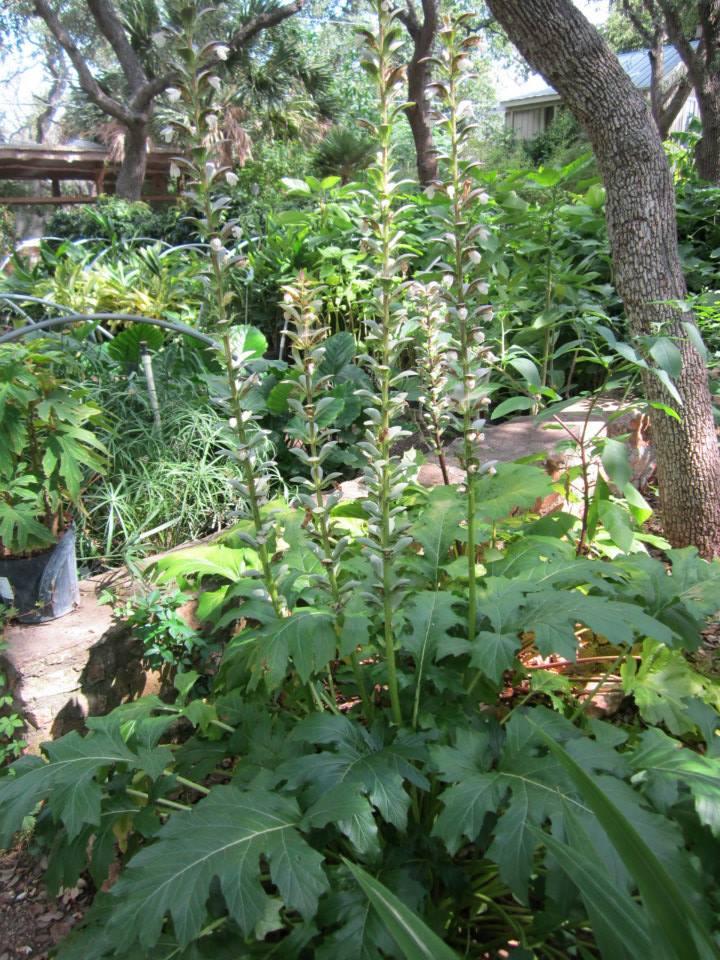 Shade Plants For Central Texas Lisa S Landscape Design