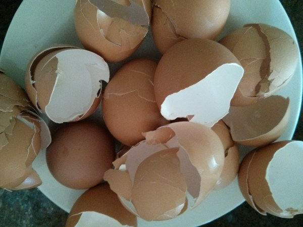 Clean, dry egg shells ready to use.