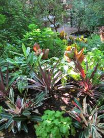 Use adequate space for each plant so that you can see the structure of each plant. Use contrast in color and texture to create the ultimate Xerophytic landscape.