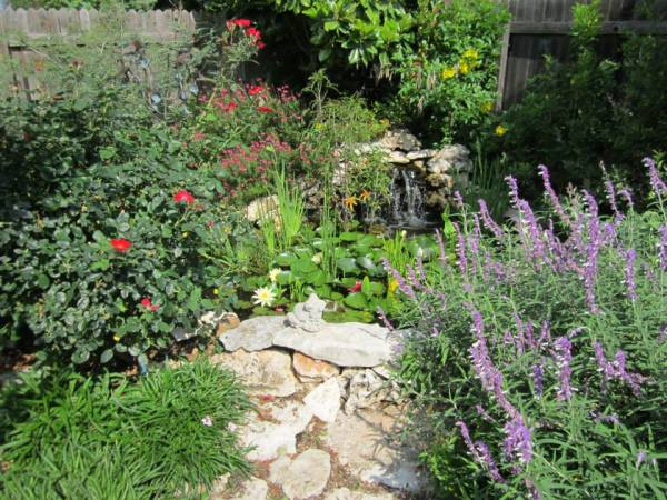 Look What I Can Do! Lush Xeriscape Landscapes in Austin ...