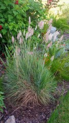 Ruby Crystal Grass, Lisa LaPaso
