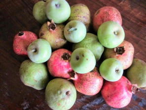 Fruit trees austin, lisa lapaso
