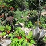 Edible and perennial landscape design