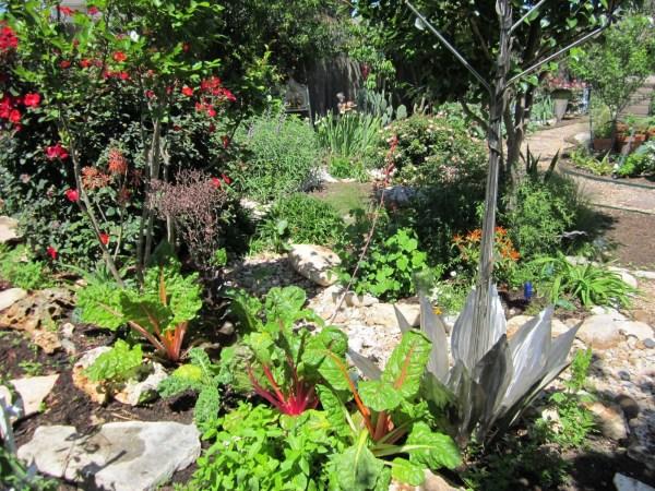 Edible Landscapes In Austin Lisa S Landscape Design