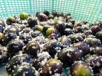 Curing Ascolana Olives