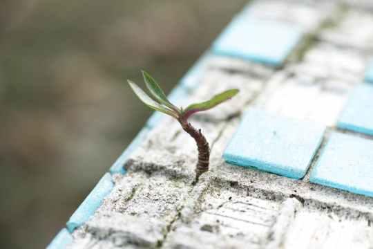 plant growing through concrete