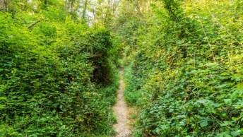 small path through undergrowth