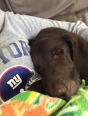 #puppysnuggles