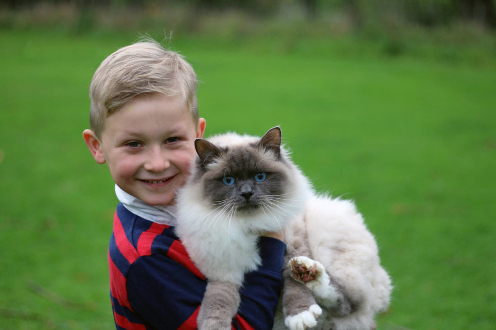 Bluepoint Birman Cat, Family Pet Portraits