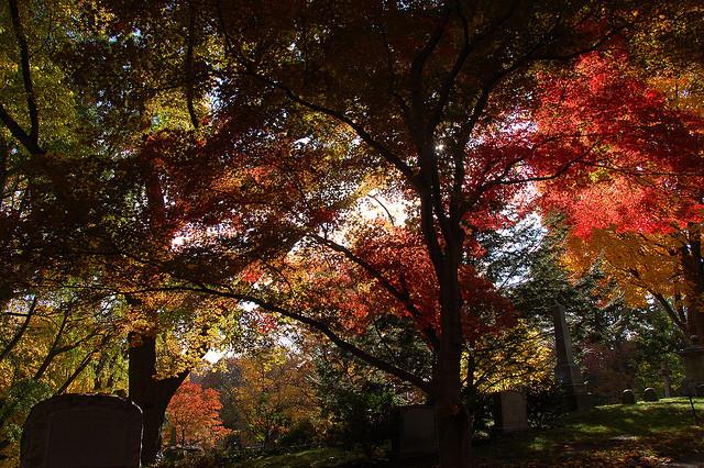 Trees grave