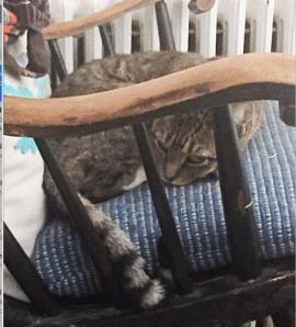 beleaguered kitty