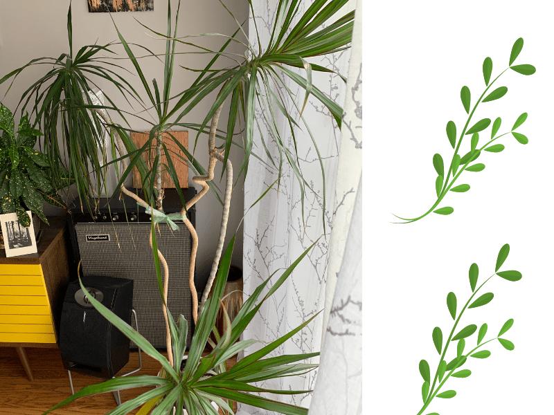 photo of palm houseplant