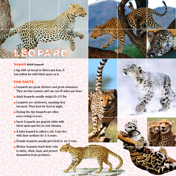 Eve Book Leopard