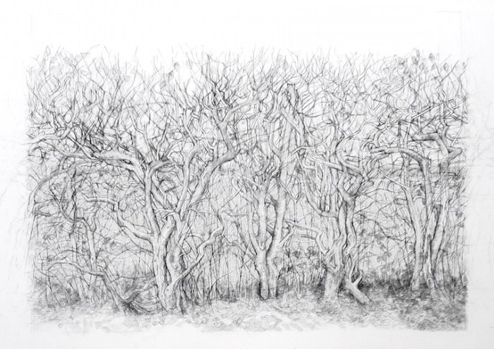 Hedgerow Drawing Charcoal Graphite