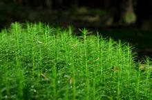 Fotosafari_glittergrønn
