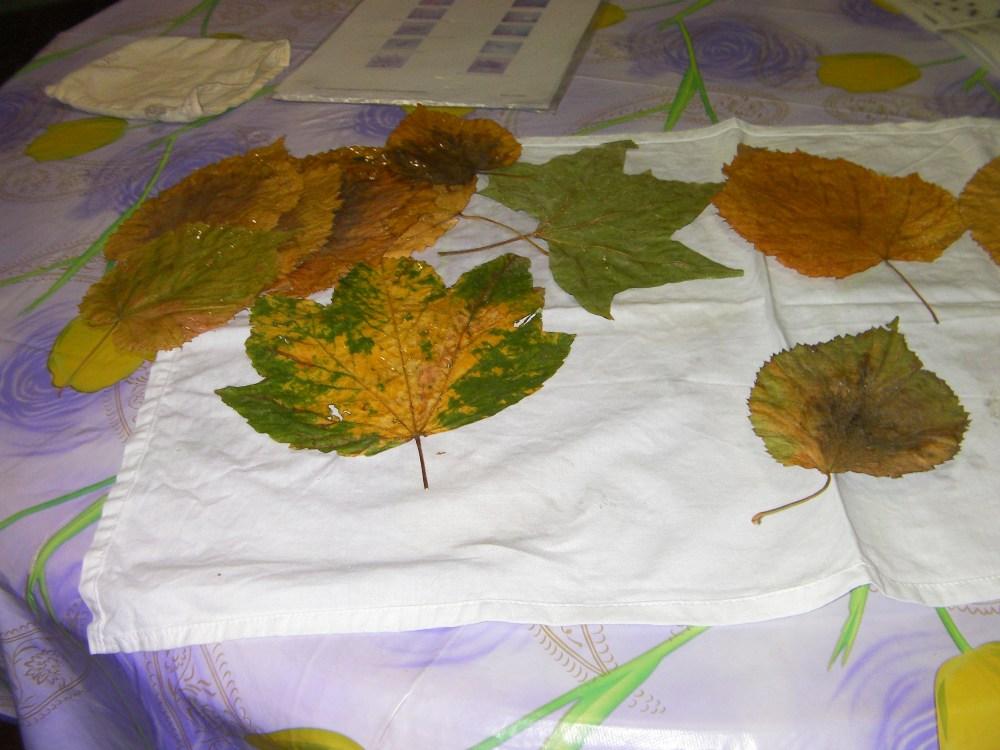 autunno: con le foglie...rose fai da te   (1/6)