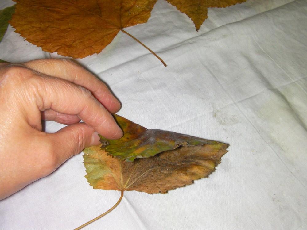 autunno: con le foglie...rose fai da te   (3/6)