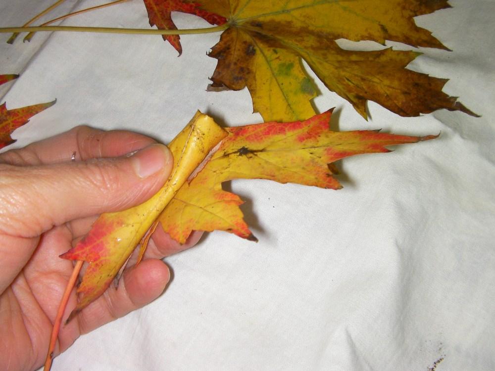 autunno: con le foglie...rose fai da te   (5/6)