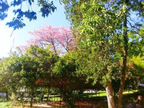 Jardim 9 de Abril