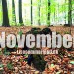 november world vegan month