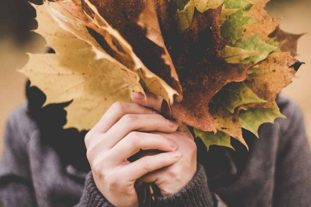 Budgetvenlige efterårs aktiviteter – Med link love