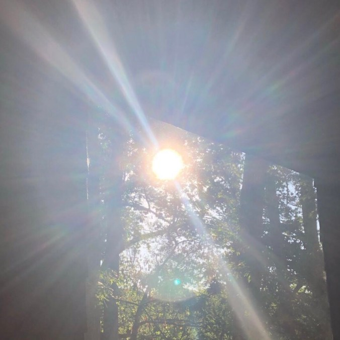 image of sun shining through screened in porch, trees in background, for article about finding light in a pandemic