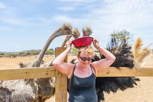 struisvogels voeren plannen curacao Lisette Schrijft