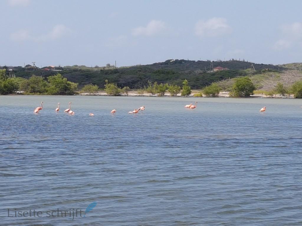 Flamingo Beach Kunuku Aqua Resort Lisette Schrijft