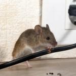 Muizengate is voorbij! Een update over de muis in huis