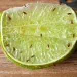 Fruitvliegjes: zo vang je ze het makkelijkst
