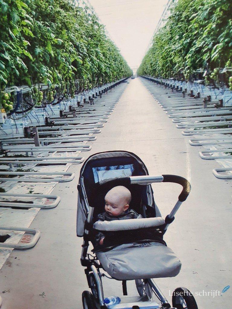 baby in kinderwagen in tomatenkwekerij