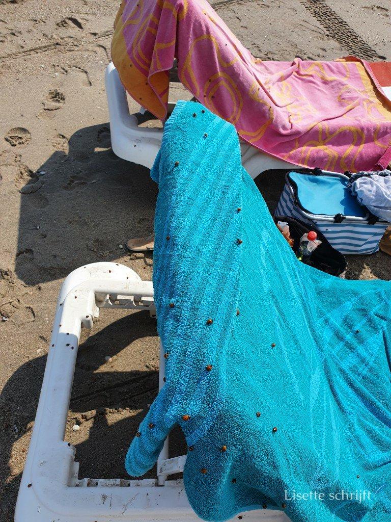 lieveheerstbeestjes op het strand