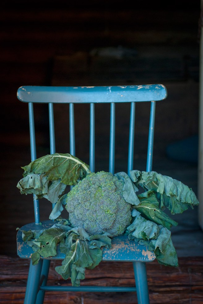 En gigantisk brokkoli. © Foto: Lise von Krogh.