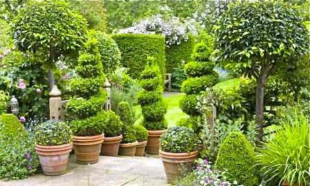 Tall spiral topiary lead to the hedge walled garden beyond—try this on a smaller scale