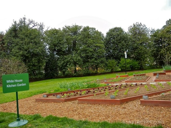 Veggie Garden—this one planted by First Lady Michelle Obama